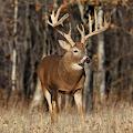 Deer Sniper 3D