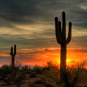 Arizona Sunset by Bud Walley - Landscapes Deserts