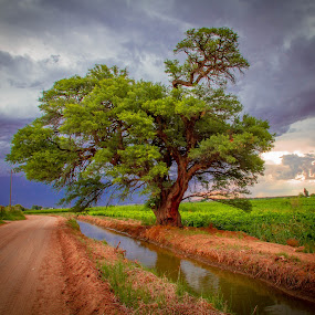 kanonoeiland by Theuns de Bruin - Landscapes Prairies, Meadows & Fields ( k )