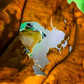 Frog, Leaves, Green, Yellow by Sulistyo Aji - Uncategorized All Uncategorized ( indonesian, macro, close up, macros, green, yellow, macrodaily, yellow leaves, indonesia, macrophotography, macro photography, macro art, macro shot,  )