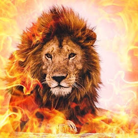 Fiery Lion by Kate Hines - Digital Art Animals ( lion, fire,  )