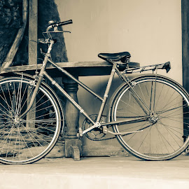 Vintage Bicycle by Monique Fouche - Transportation Bicycles