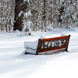 by Dipali S - Artistic Objects Furniture ( snowfall, copy space, bench, kids, furtniture, landscape, storm, woods, michigan, sky, wooden, cold, nature, snow, children's bench, scene, trees, weather, branches, covered )