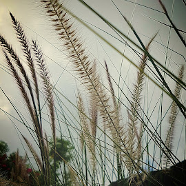 Shades of grass by Hayley Moortele - Nature Up Close Leaves & Grasses ( #shadesofcolours, #fluffygrass, #grass, #contrasts )