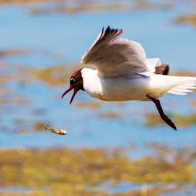 by Ciprian Nafornita - Animals Birds