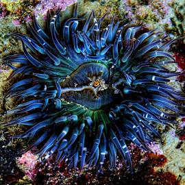 by Chris Klug - Animals Sea Creatures
