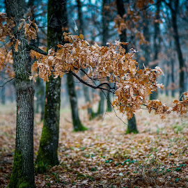 Waiting for the spring by Marius Novac - Landscapes Forests ( atmosphere, forest, landscape, leaves, bokeh )