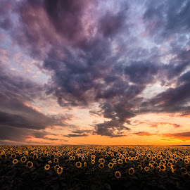 Endless field and sky by Alex Jitaru - Landscapes Sunsets & Sunrises