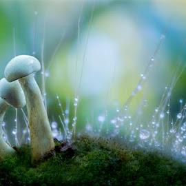 by Nicholas Wibowo - Nature Up Close Mushrooms & Fungi