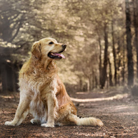 In the mist.... by Hilda Palm - Animals - Dogs Portraits ( happy, lovely, forest, dog, mist )