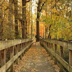 Walking Bridge by Karen Carter Goforth - Uncategorized All Uncategorized ( leaves, nature, woods, wood, bridge, trees,  )