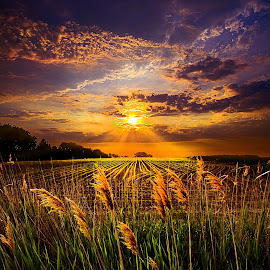 Into Light by Phil Koch - Landscapes Prairies, Meadows & Fields
