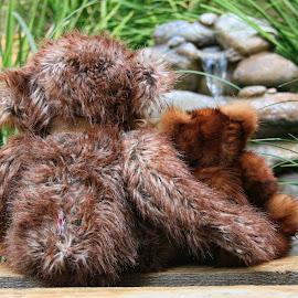 Teddy Musings by Carole Pallier Cazzazsnapz - Artistic Objects Toys ( bear, toy, waterfall, fur, garden, rocks, reeds, teddy )