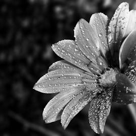 by Kris Pate - Black & White Flowers & Plants