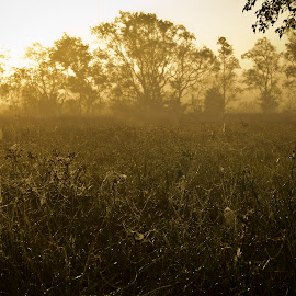 Field of webs by Barry Blaisdell - Nature Up Close Webs ( field, foggy, webs, trees, dew drops, morning, spider web )