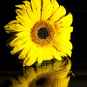 Sun In My Eyes by Ellen Foulds - Nature Up Close Flowers - 2011-2013 ( reflection, nature, daisy, yellow flower, flower )