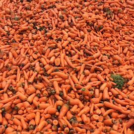 Big Pile Of Carrots by H Scott Burd - Food & Drink Fruits & Vegetables ( orange color )