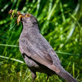 Dinner time by Eduard Andrica - Animals Birds