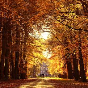 AUtumn colours by Hilda van der Lee - Landscapes Forests ( nature, autumn, forest, landscape, light, colours,  )