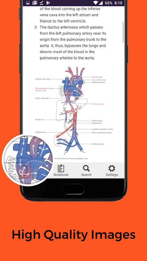 Anatomie FlashCards android apps download