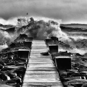 Sea by Fabio Ponzi - Black & White Landscapes ( bird, clouds, seagull, sea storm, waves, pier, sea, seascape, storm, rocks )