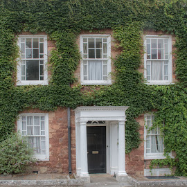 Cathedral Yard - Exeter by Wendy Richards - Buildings & Architecture Homes ( home, green, devon, house, architecture, ivy, leaves, exeter )