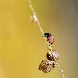 Naturaleza by Maritte Lazcano - Abstract Macro ( insecto, plantas, silvestre )