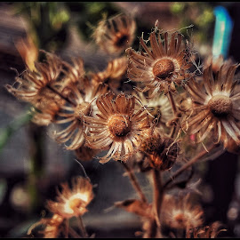 Dry flower by Rajesh Mondal - Nature Up Close Other plants ( mobilography )