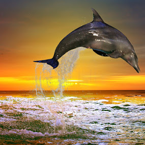 Sunset Jump by Alit  Apriyana - Animals Sea Creatures