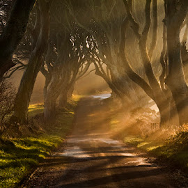 The Road Goes Ever On & On by Gary McParland - Landscapes Forests ( the dark hedges, ireland, co antrim, armoy, trees, sunrise, light, mist )