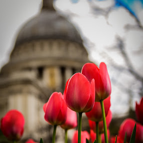 flowers  by Balan Gratian - Flowers Flower Arangements ( london park, spring flowers, st paul london, tulips, flowers )