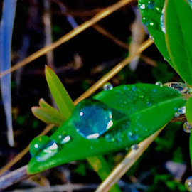 Green, blue marbles... by Debbie Squier-Bernst - Nature Up Close Natural Waterdrops
