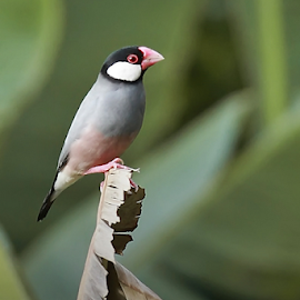 by Hernawan Safari - Animals Birds
