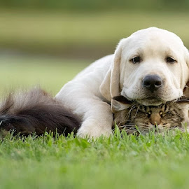 puppy pay with cat by Masud Rubel - Animals - Dogs Puppies