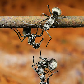 by 善 向 - Animals Insects & Spiders