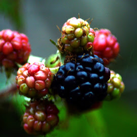 berries by Kathleen Brady - Nature Up Close Gardens & Produce