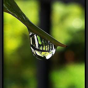 After the Rain... by Suzy Sutton - Uncategorized All Uncategorized