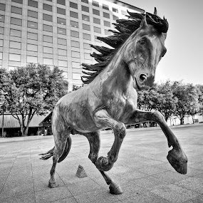 Mustang of Las Colinas by Fitz C - Buildings & Architecture Statues & Monuments ( mustang, statue, black and white )