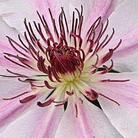 by Ann Bjerring Ravn Weis - Flowers Single Flower