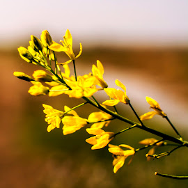Mustard by Soyam Chhatrapati - Nature Up Close Leaves & Grasses