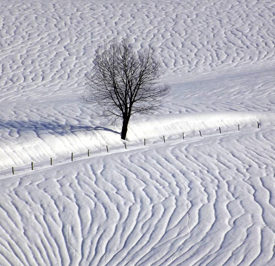 bijele brazde by Jelena Puškarić - Landscapes Travel ( , snow, winter, cold )
