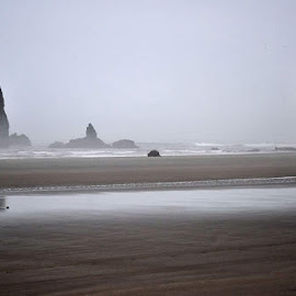 Unearthed  by Nikki Loehmer - Landscapes Beaches