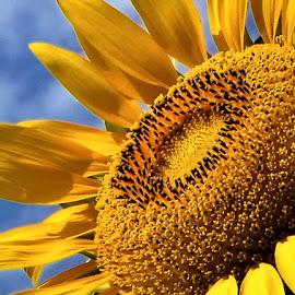 by Dawn Bowman - Flowers Flower Buds