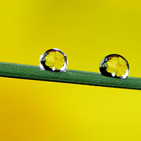 by Ryan Espe - Abstract Water Drops & Splashes