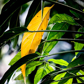Yellow by Dimas AJ - Nature Up Close Leaves & Grasses
