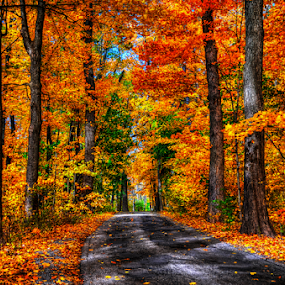 Fall Road by John Larson - Landscapes Forests ( fall, trees, forest, road, leaves, woods )