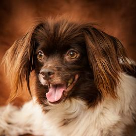 Cerise by Myra Brizendine Wilson - Animals - Dogs Portraits ( canine, cerise, pet, dog )