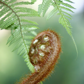 by Dadan Suryasaputra - Nature Up Close Other plants