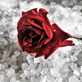 CRYSTAL ROSE by Vignesh Vicky - Instagram & Mobile iPhone ( rose, novice, mobile )