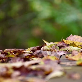 Fall bench by Mindi Baum-sherlin - Nature Up Close Leaves & Grasses ( park, season, autumn, upclose, outdoors, fall, blur, leaves )